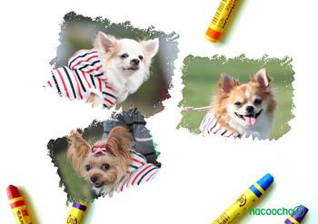 2013 09 14 レジーナの森愛犬撮影会.jpg