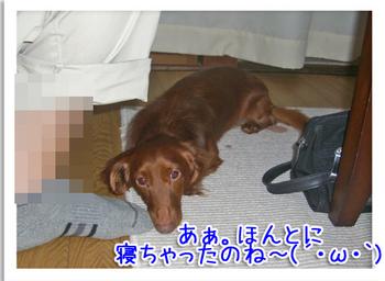 がーん!.jpg