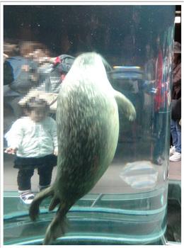 旭山動物園あざらし.jpg