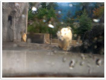 旭山動物園しろクマドーム.jpg