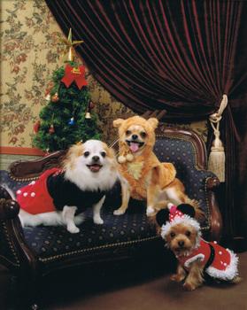 クリスマス2007縦.jpg