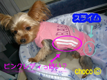 cho07072202.jpg