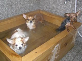 2007 11 25 風呂3わん.jpg