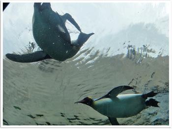 旭山動物園ペンギン.jpg